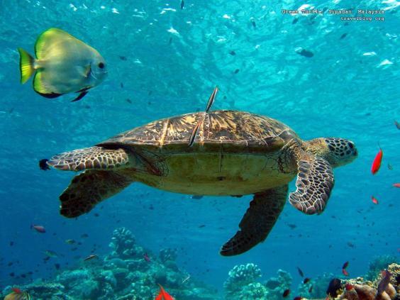 File:Under-water.jpg