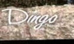 Dingologo