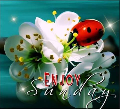 File:Enjoy Sunday.jpg