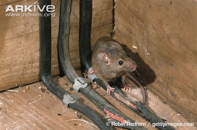 old wiring in house - facbooik,
