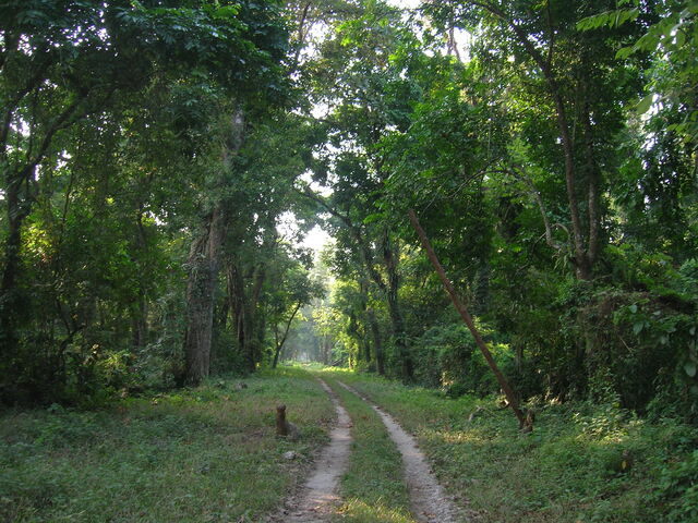 File:Gorumara Deep Forest Arnab Dutta.JPG