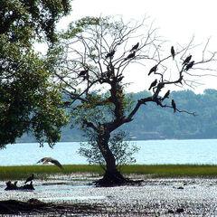 The Salim Ali Bird sanctuary