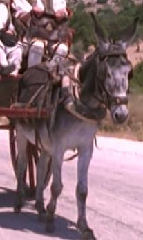 File:Plato the donkey.jpg