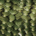 Green dragon scales.jpg