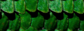 Scales tiled background.png
