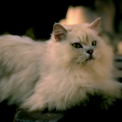 M.A.D. Cat as he appears in <i><a href=