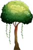 Forest 11