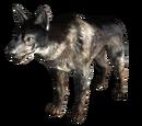 Dogmeat (FO3)