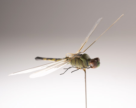 File:Museum insectovothopter dragonfly operational 007.jpg