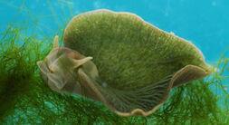 SeaSlugPlantAnimal011210