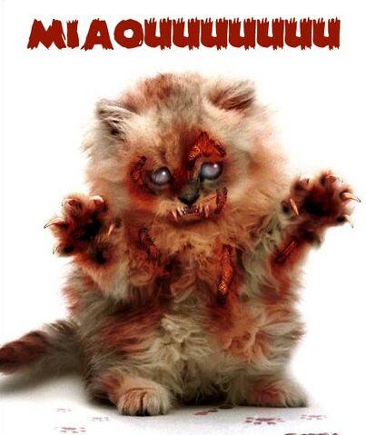 File:Zombiekitten.jpg