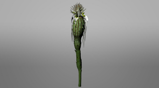 File:Pandora ROVR Thistle Bud.png