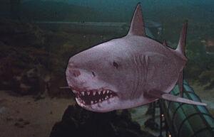 Great White Shark from Jaws the Revenge 1-0