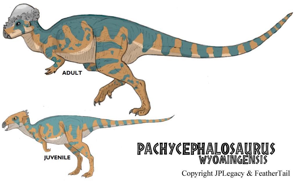Pachycephalosaurus Wyomingensis Jpl Live The Legend Wiki