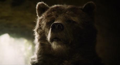 Baloo the Bear 2016
