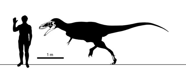 File:800px-Alioramus skeletal steveoc.png