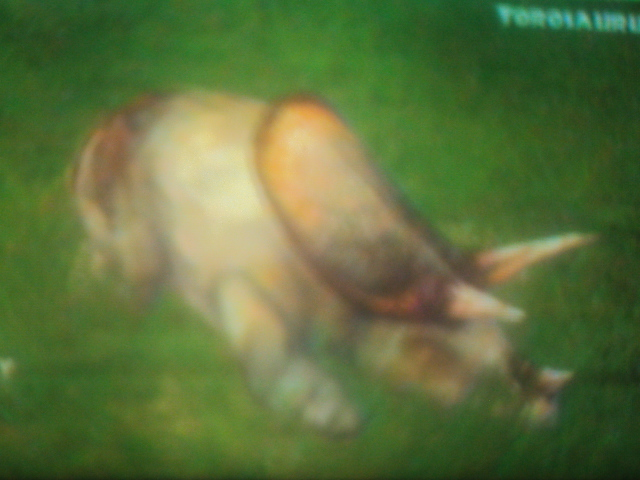 File:Torosaurus is sleeping.JPG