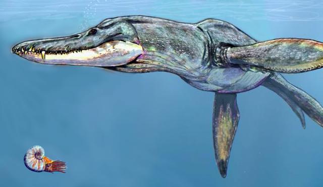 File:Pliosaurus rossicus.jpg