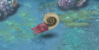 File:Ammonite infant.png