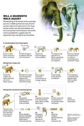 File:Mammoth cloning.jpg
