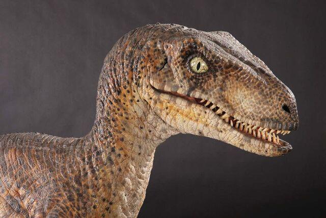 File:Velociraptor korea robot occupycorporatism.jpg