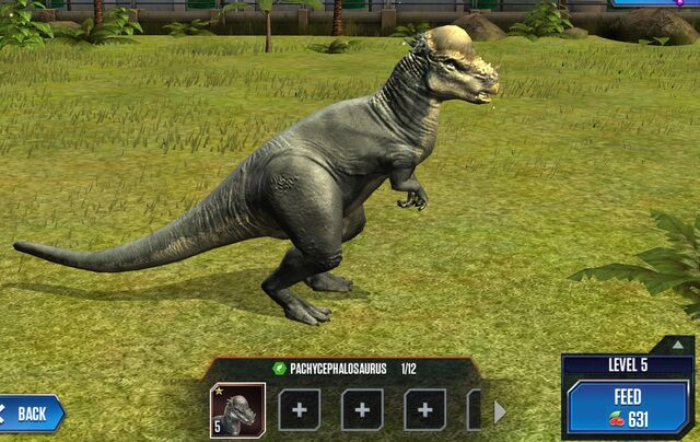 File:Pachycephalosaurus Base.jpg