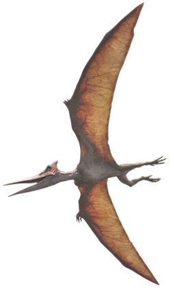 File:Pterano.png