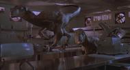 Raptors-2