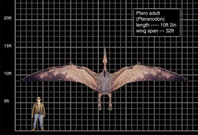 File:Ptero adult-1-.jpg