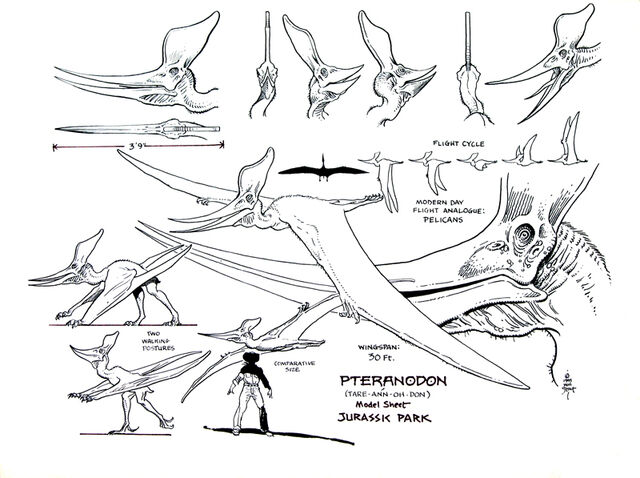 File:JPPteranodon.jpg