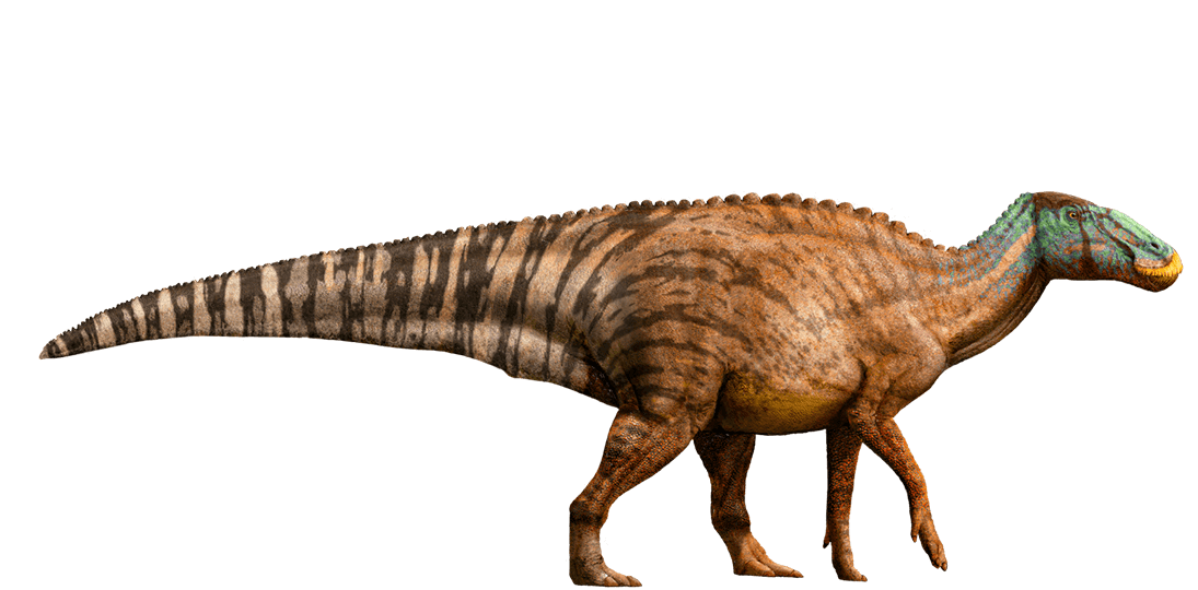 Edmontosaurus | Jurassic Park wiki | Fandom powered by Wikia