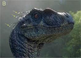 File:Alpha male raptor.jpg