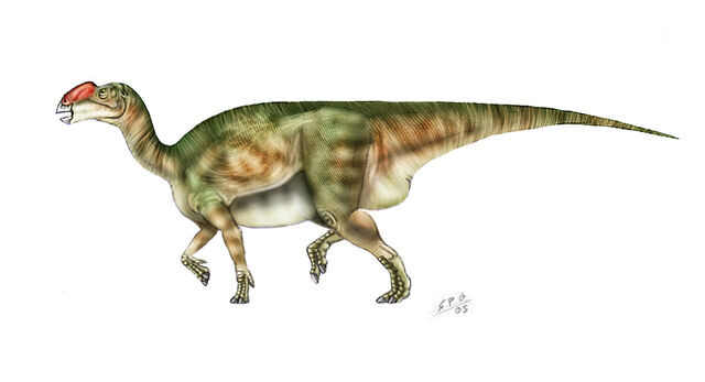 File:Muttaburrasaurus langdoni by unlobogris.jpg