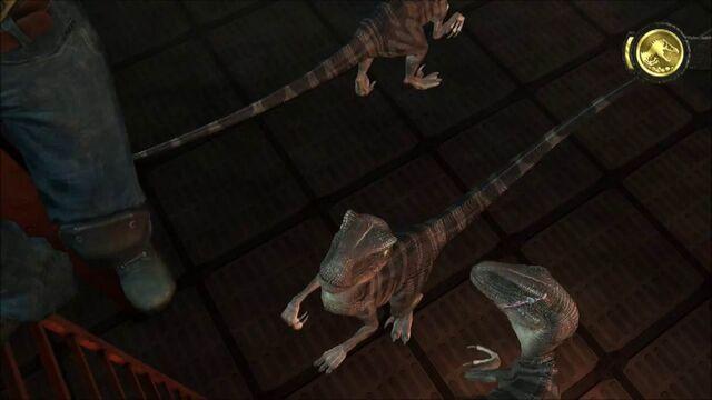 File:Scarred-raptor-leader-jptg 5.jpg