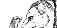 Ferret/Meta