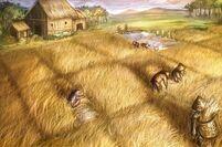 Barley Farm 2