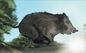 File:Boar 2.jpg