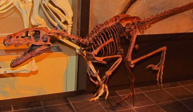 File:Dromaeosaurus, Ottawa.jpg