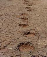 Sauropod tracks