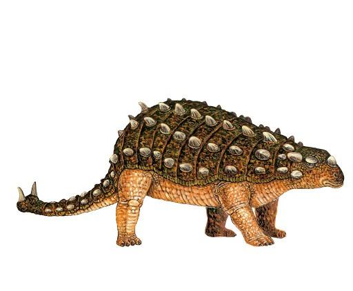 File:Scolosaurus.jpg