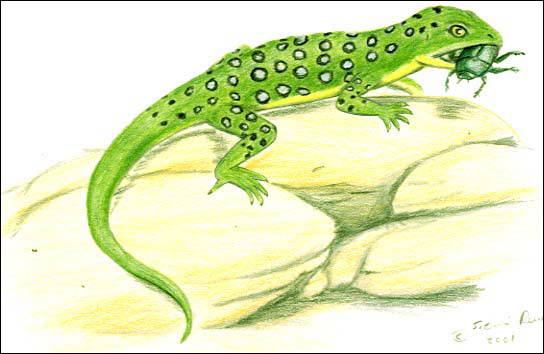 File:Diphydontosaurus.jpg