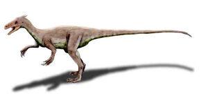 Ornitholestes NT