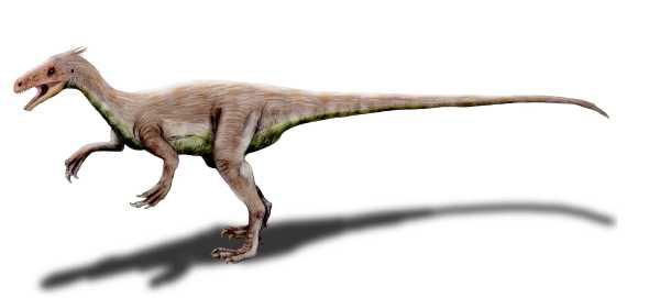 File:Ornitholestes NT.jpg