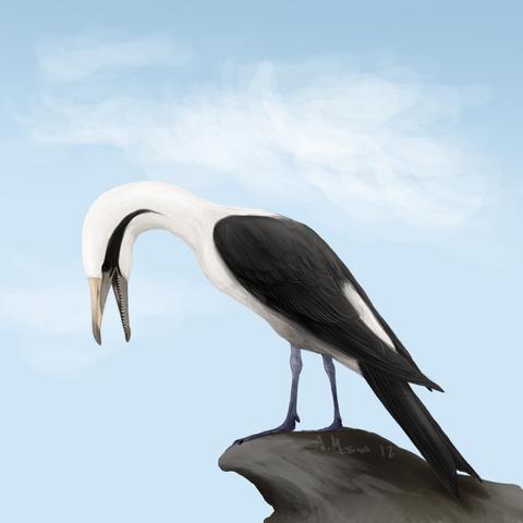 File:Ichthyornis dispar.png