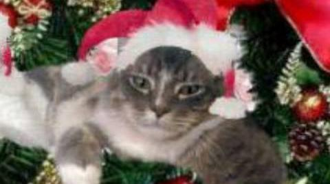 "Cat sings ""We wish you a merry Christmas"""