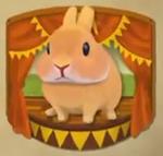 RabbitShow