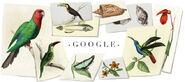 Google William John Swainson's 224th Birthday