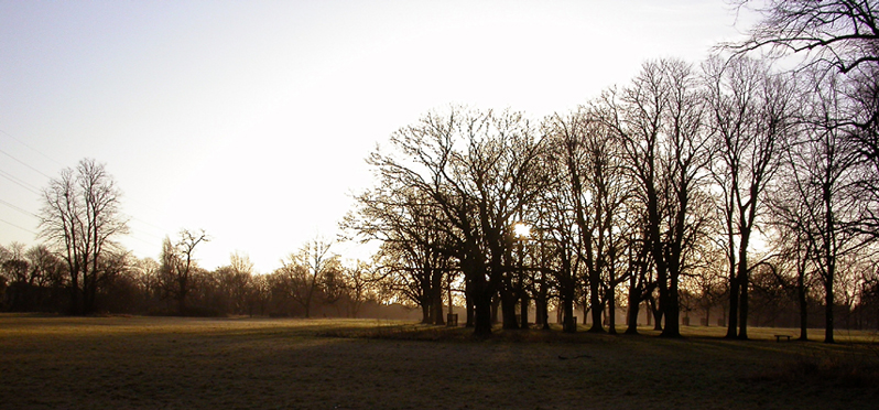 Morden Hall Park Dawn on the Meadows looking SE Lime & House Chessnut Avenue on right