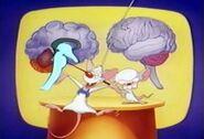 Brainstem1