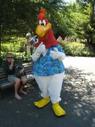 Foghorn Leghorns in Six Flags